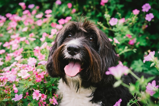 Have a Happy and Healthy Transition To Spring With Pet Probiotics for Dogs | Intesto-Guard™